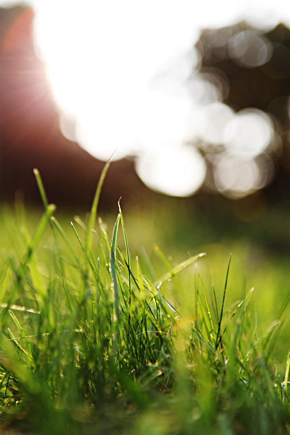 05-Grass